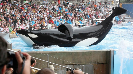 Whales in Captivity: Congress Mandates $1M of Research to Study the Effects