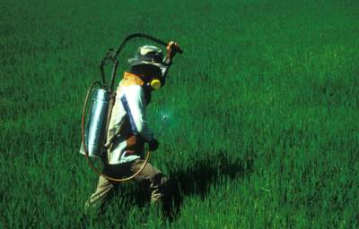 Herbicide Ban on Hold in Sri Lanka, as Source of Deadly Kidney Disease Remains Elusive