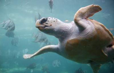 Protecting America's Underwater Serengeti