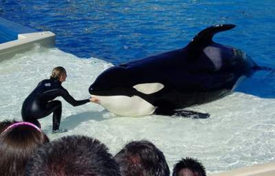 Yes, California Can Really Ban Shamu, Legal Experts Say