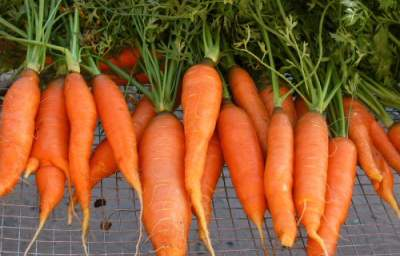 Carrots, Beta-Carotene Found to Reduce Heart Attack Risk, Boost Heart Health