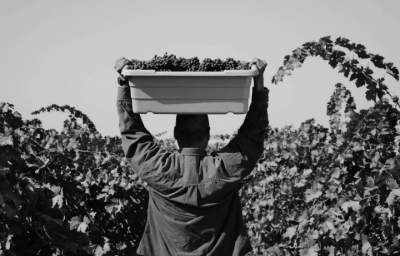 From Field to Table: Rights for Workers in the Food Supply Chain