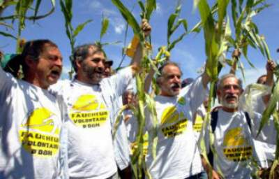 French Parliament Permanently Bans All GMO Maize Effective this Year