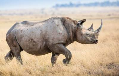 Don't Forget This World Rhino Day that Killing Isn't Conservation