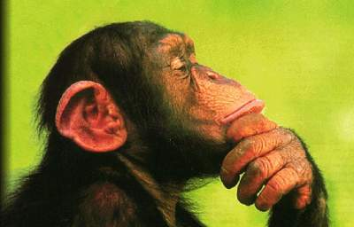 Applause for U.S. Fish and Wildlife's Long Overdue Chimpanzee Proposal