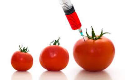 Toxic Truth: Evidence GMO Foods are Far Different from Non-GMO Foods