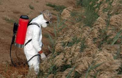 RoundUp Tainting our Food: Monsanto Misleads on Glyphosate-Tainted GM Crops