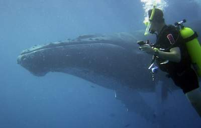 IMO Adopts New Guidelines that Could Make Oceans Quieter Places for Whales