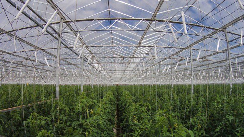 Australian Farm Grows 17 000 Tonnes Of Vegetables Using