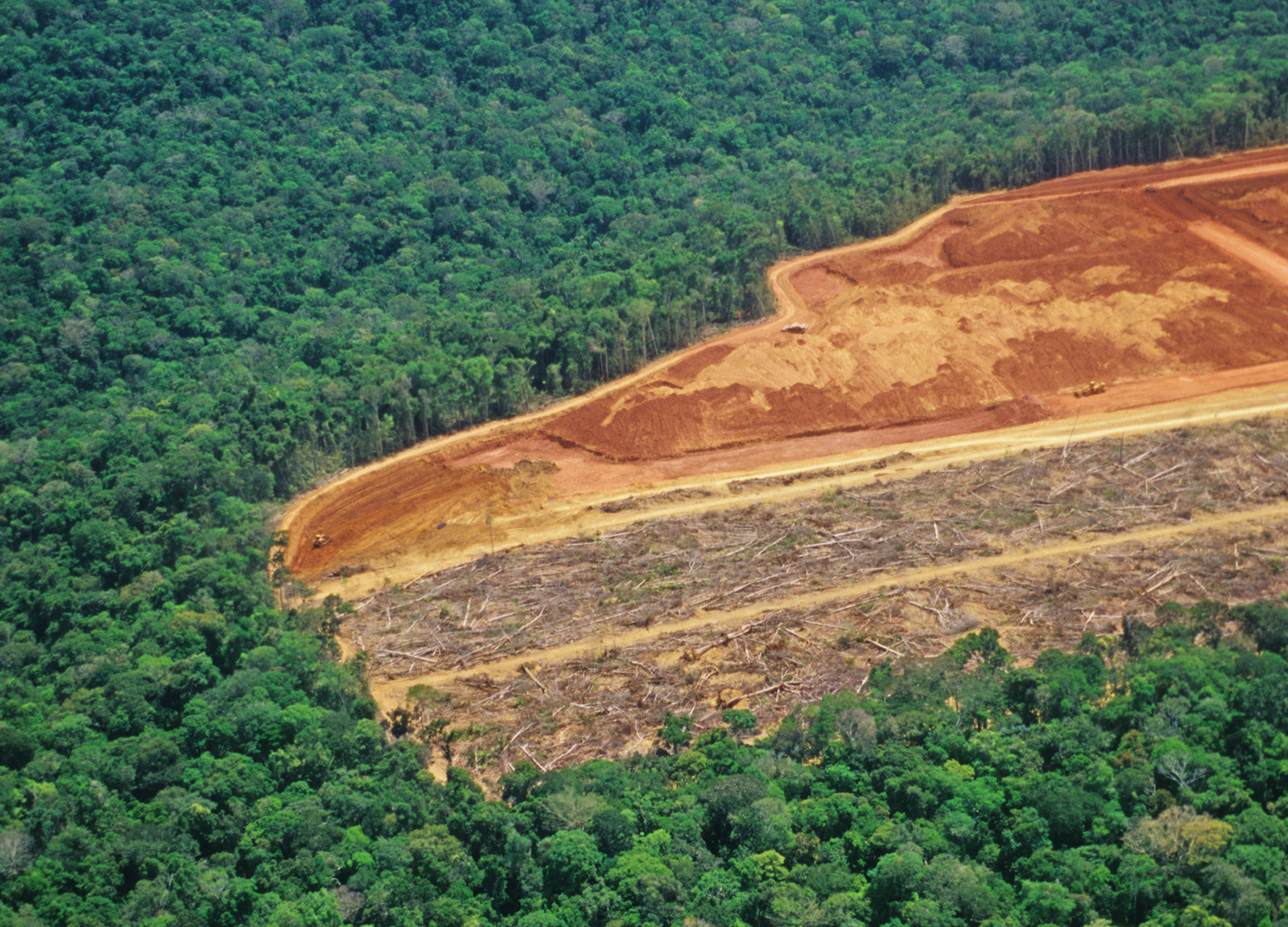 Amazon Rainforest deforestation at its worst – equivalent ...