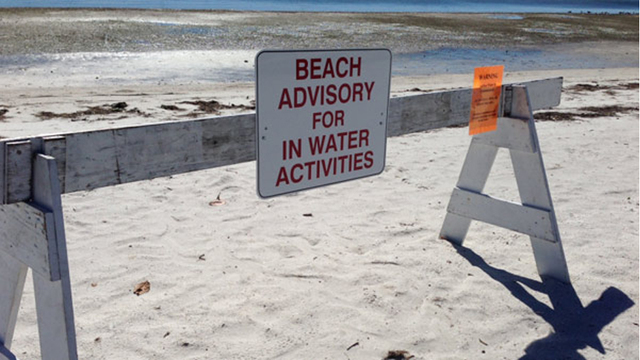 Florida beaches closed due to fecal bacteria in water - NationofChange